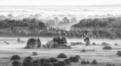 foggy field in the morning - bw version. - stock photo