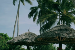 Palm trees in exotic place Stock Footage