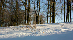 Sun, snow, tree RAW quality Stock Footage