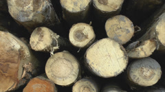 Sawed tree trunks - stock footage