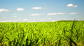 Green field with white clouds and green grass 4k or 4k+ Resolution