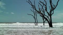 Dead tree bone yard in ocean Stock Footage