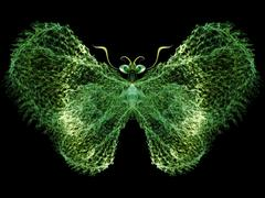 Butterfly Abstraction - stock illustration