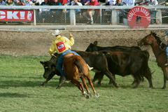 Cowboy Roping Steer - stock photo