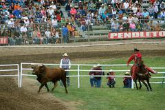 Cowboy Steer Roping - stock photo