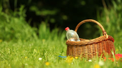 Picnic. Bottle of water in the basket on the meadow. Stock Footage