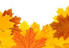 Stock Illustration of Autumn maple leaves