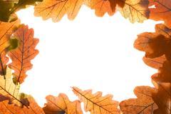 Oak leaves frame - stock photo