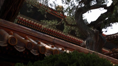 Cool roofs at the forbidden city in beijing china Stock Footage