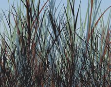 Grass jungle Stock Illustration