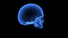 Human Skull - stock footage