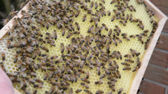 Honey comb at Hive frame and bees Stock Footage