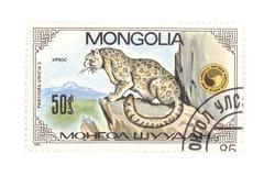 Stock Photo of postage stamp panthera close up