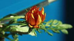 Kukkiva kukka 4k outo vaikutus Arkistovideo