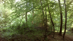 4k Hidden place silence in the deep Forest Stock Footage