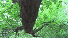 Tree trunk above the ground, rain Stock Footage