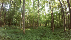 4k Summer silence in the Forest Stock Footage