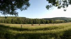 4k Horses on a meadow Stock Footage