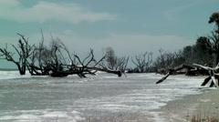 Bone yard beach of dead trees Stock Footage