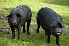 Two black mates - stock photo