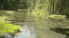 Clear water flowing on the spring Stock Footage