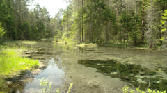 The landscape view of the spring and woods Stock Footage