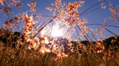 4K Warm Summer Sun Through Grass Stock Footage