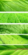 Stock Photo of Collection of banners with green leaf texture