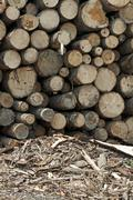 Timber. Planks and beams arranged Stock Photos