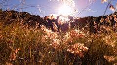 4K Grass Seeds Stock Footage