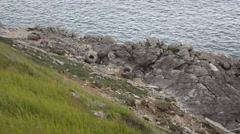 Fossil forest Lulworth Cove Dorset England Stock Footage