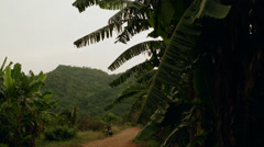 Thailand Tropical Forest Stock Footage