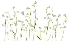Flowers over white Stock Illustration