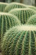Cactus of sphericity style grows in sand Stock Photos