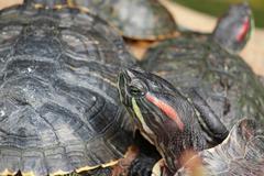Tortoise sitting on stone Stock Photos
