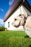 Eläin. aikuinen koira lemmikki kävellä puutarhassa. Kuvituskuvat
