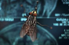 Big red eyed fly on blue abstract background - stock photo