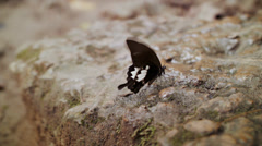 Thailand Butterfly Stock Footage