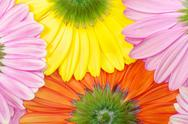 Stock Photo of gerbera flower