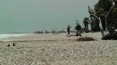 People on beach with driftwood and shells Stock Footage