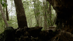 Thailand Cave Entrance Stock Footage