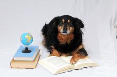 reading dog - stock photo