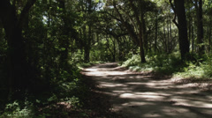 Island forest dirt road way Stock Footage