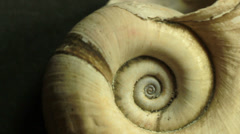 Spiral shell in macro start rotating Stock Footage