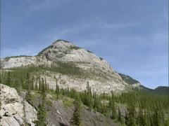 Rocky Mountain goats (Oreamnos americanus)  + tilt up mountain peak - stock footage