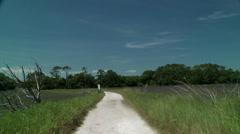Birds fly across tree line marsh foot path Stock Footage