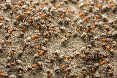 Ants Colony Stock Photos