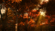 Stock Video Footage of autumn forest at sunset 002 HD