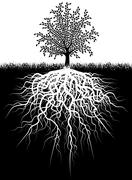 tree roots - stock illustration
