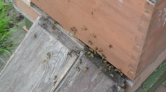 Bees flying into Beehive Stock Footage